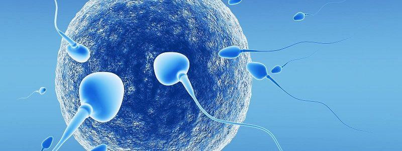 لقاح مصنوعی یا IVF چه کمکی به زوج نابارور میکند؟